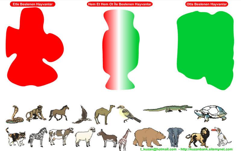 Kuzan Beslenme Türlerine Göre Hayvanlar Testi