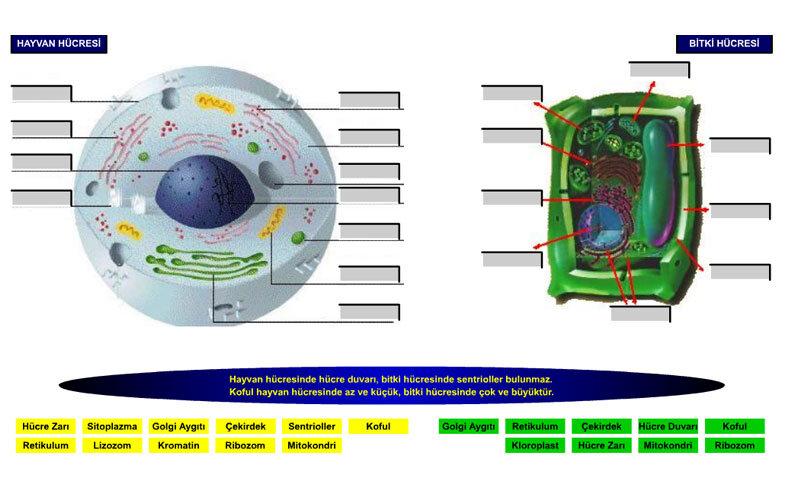 Kuzan Bitki ve Hayvan Hücreleri Öğrenme Testi